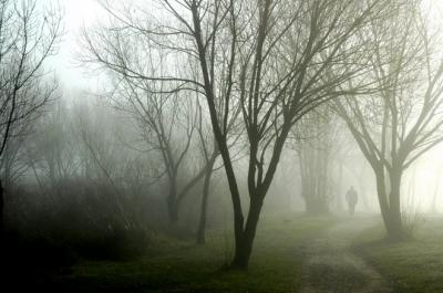 20080502205328-bosque.-sebas-navarretepolvoranca-4.jpg
