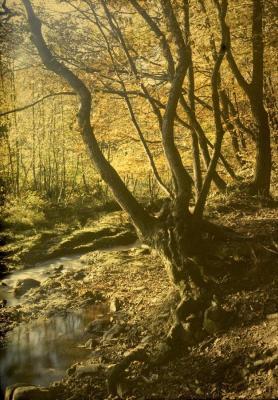 20090130100926-paisajes-de-mi-infancia.jpg