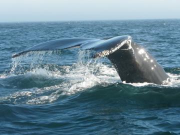 20090721121834-gascon.-ballenas.jpg