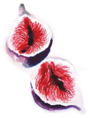20091220151809-lina-larumbe-higos.jpg