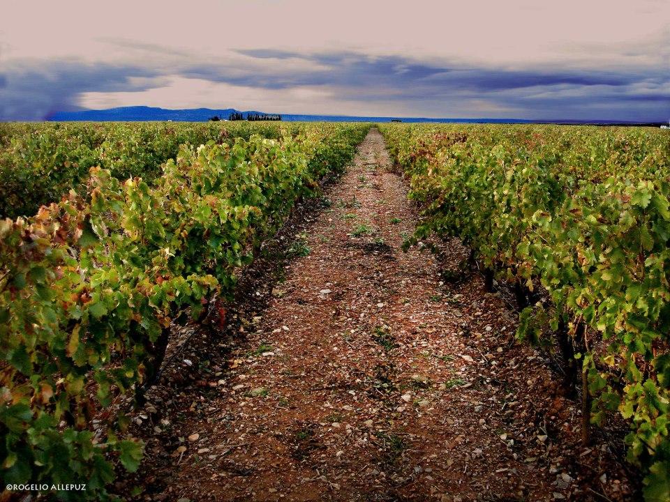 20121216180030-rogelio-allepuz.-campo-de-carinena.jpg