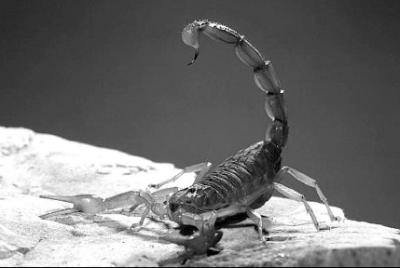 20150910173744-escorpion.png