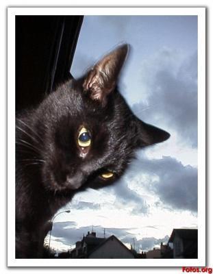 20071226094428-gato-negro.jpg