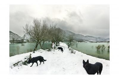 20100308224915-wolves.jpg